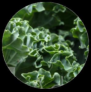 Image of Vitamin K1